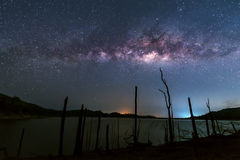 Milky way over dead trees Stock Image
