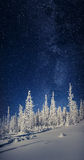 The Milky Way over the fir trees in the winter mountain forest. Stock Images