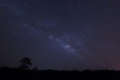 Milky way over the forest.  royalty free stock photos