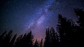 Milky way over forest Stock Photography