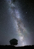 Milky Way over a lonely tree Stock Images