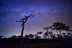 Milky way over pine forest Stock Photos