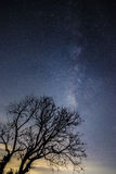 Milky Way over tree. So beautiful Stock Photography