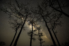 The Milky way over trees in forest stock photography