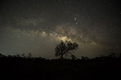 The Milky way over trees in forest stock image