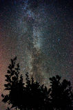 Milky way over treetops Royalty Free Stock Photos