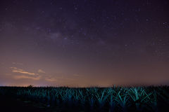 Milky Way in Pineapple Farm. Night view and Milky Way in Pineapple Farm at Simpang Renggam, Johor, Malaysia Stock Photography
