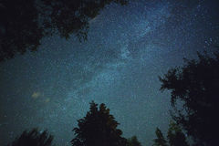 Milky way. Real Milky Way photo seen through trees Royalty Free Stock Photos