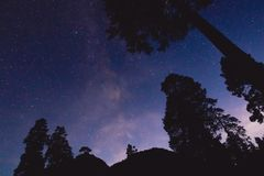 Milky Way and silhouette of trees in the mountains. Night panoramic landscape. Milky Way, stars and silhouette of trees in the mountains Stock Photo
