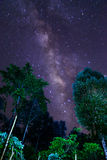 Milky Way and some trees. In the mountains of Bolaven Plateau. Royalty Free Stock Photography