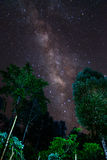 Milky Way and some trees. In the mountains of Bolaven Plateau. Royalty Free Stock Image