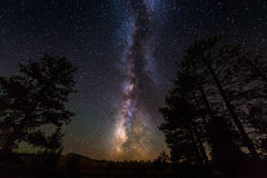 The Milky Way and some trees. Royalty Free Stock Image