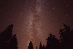 The Milky Way and some trees Stock Photos