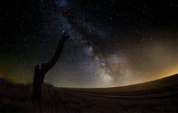 Milky Way Stars. Old tree on milky way Stock Photography
