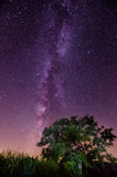 Milky Way summer tree Royalty Free Stock Images