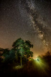 Milky Way summer tree Royalty Free Stock Photos