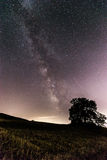 Milky way and tree Royalty Free Stock Photos