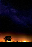 Milky Way and a tree Stock Images
