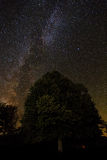 Milky way tree silhouette Royalty Free Stock Images