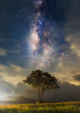 The milky way and the tree stand alone Royalty Free Stock Photos