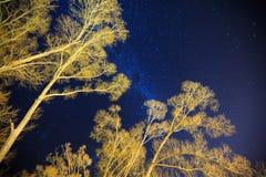 Milkyway acima da árvore Fotografia de Stock