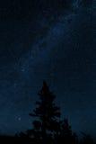 Milkyway avec un arbre Photographie stock