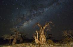 Milkyway and baobab trees at night. Kubu Island, Botswana Stock Images