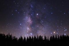 Milkyway bonito e a silhueta do pinheiro em um céu noturno sejam fotografia de stock royalty free