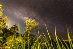 Milkyway en selva tropical imagen de archivo libre de regalías