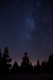 Milkyway on forest Stock Photo