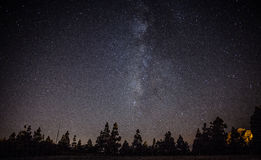 Milkyway on forest Stock Photos