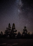 Milkyway on forest Royalty Free Stock Image