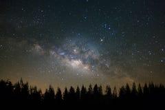 Milkyway hermoso y la silueta del árbol de pino en un cielo nocturno sean fotografía de archivo