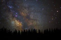 Milkyway hermoso y silueta del árbol de pino en un cielo nocturno foto de archivo