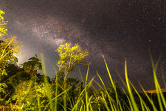 Milkyway in rainforest. A milkyway rise over the horizon in Malaysia rainforest Royalty Free Stock Image