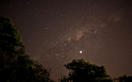 Milkyway. Rising over trees Royalty Free Stock Images