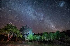 The Milkyway stretches across the sky over African bush at Umkhuze game reserve royalty free stock photo