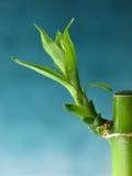 Millón de brotes de bambú Fotos de archivo libres de regalías