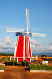 Mill at Blooming Field. Mill at blooming tulip field in sunny day Stock Photos