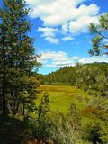 Mill Creek Meadow. View along Mill Creek in the Ochoco Mountains east of Prineville, OR stock images