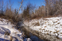 Mill Creek ravine, Edmonton, Alberta, Canada. Open water  in Mill Creek ravine park in winter time with ducks and reflection Stock Photos