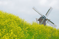 Mill on dike with yellow flowers Stock Images