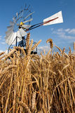 Mill n crops. Traditional vaned windmill or windpump from low viewpoint with ripe crops in foreground Royalty Free Stock Image