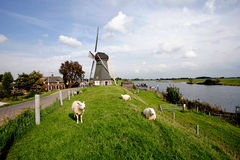 Mill in the Netherlands Royalty Free Stock Image