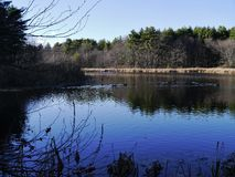 Mill pond with water fowl. Mill pond in late fall Stock Photos