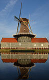 Mill The Salamander. Stock Photo
