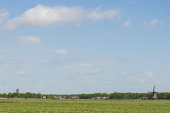 Mill Zwaantje with grassland in Friesland Stock Photography