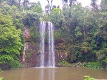Millaa Millaa Falls, Australia royalty free stock photos