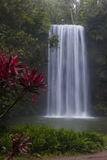 Millaa Falls with Red Plant Stock Photography