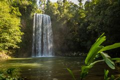 Millaa Milla Falls in the summer in Queensland, Australia royalty free stock photography